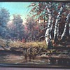 """Autumn Landscape with Birch Trees 30""""x22"""" Framed / Oil on Canvas Signed / Unknown Age"""
