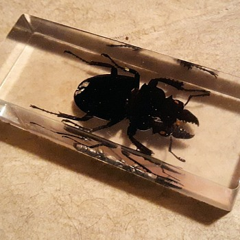 Taxidermy Tuesday Creepy Crawlies In Resin - Animals