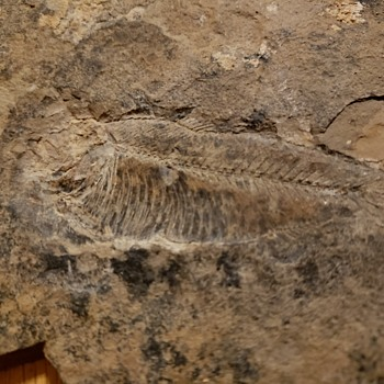 What type of fossil is? - Animals