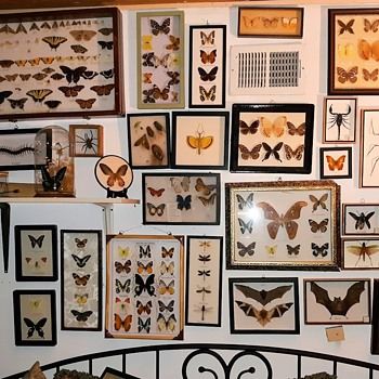 My Rather Large Butterfly Insect Arthropod Bat and More Collection - Animals