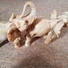 My Grans Elephants!Help solve my mystery !
