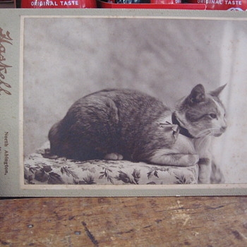 Cabinet Photo of a Cat - Animals