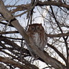 A VISITATION OF OWLS
