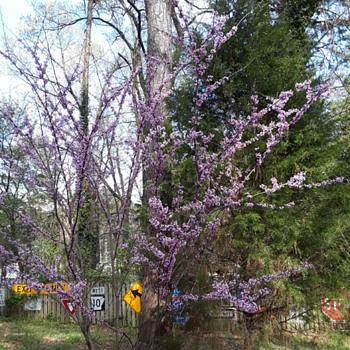 a few more 'random springtime flowers' around here for y'all - Photographs