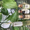 Vintage Max Factor perfume oil