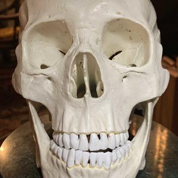Open Skull for Studying the Brain