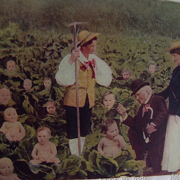 ORIGINAL CABBAGE PATCH KIDS FOUND! PENNY POST CARD,DIVIDED BACK. BABIES IN CABBAGE PATCH, c.1910 - Postcards
