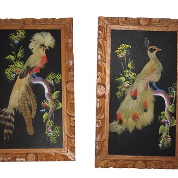 Bird Feather Pictures - Animals