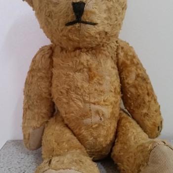 rescued teddy