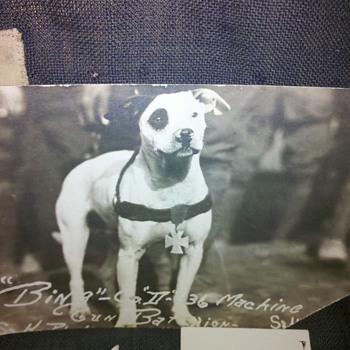 WWI Pit Bull mascot! - Military and Wartime