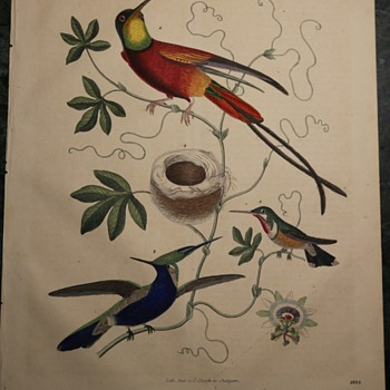 1844 German Lithograph of Some Tropical Hummingbirds - Fine Art