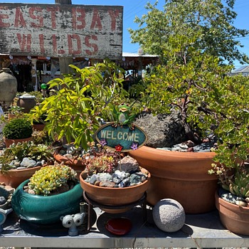 Welcome to my Native Plant Nursery - Pottery