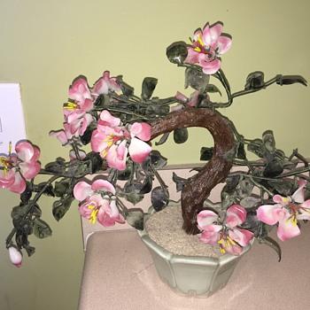 Asian bonsai tree