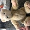 Teddy Bear needs identified