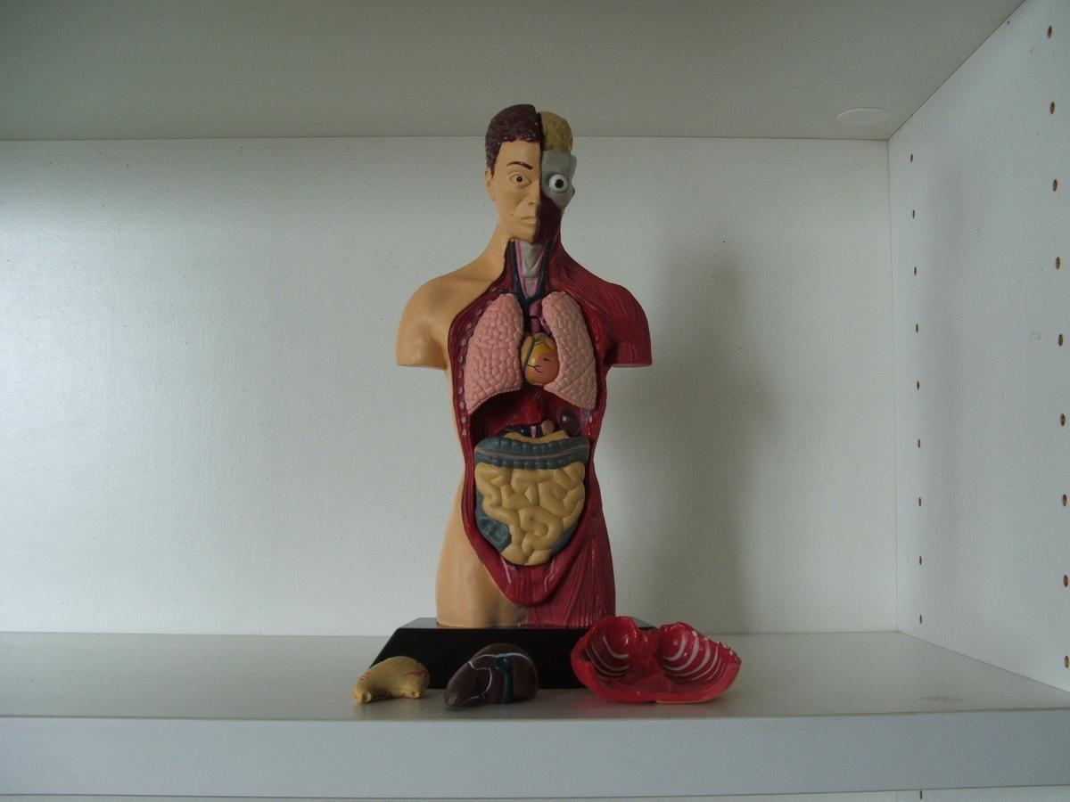 Human Anatomy Doll Collectors Weekly