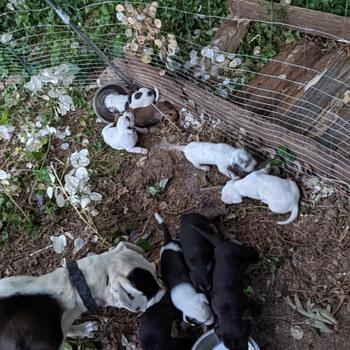 9 little puppydog tails ;-) - Animals