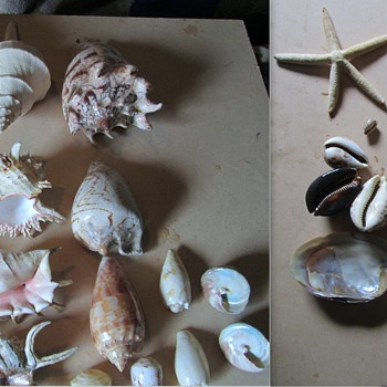 Some Sea Shells I have. - Animals