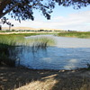 A Morning Walk! :^D