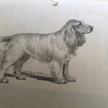 Sketches of Spaniel Dog 1950's unknown Artist, Peter A Juley Photographer   - Animals