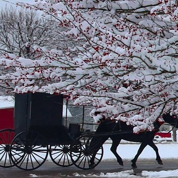 Barnesville Buggy Ride in a Winterberry Wonderland - Photographs