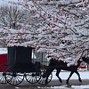 Barnesville Buggy Ride in a Winterberry Wonderland