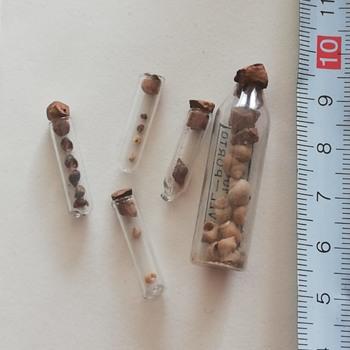 Micro Mollusks  - Animals
