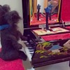 """Needle Felted Sculpture """"Practice Time with Mitzi"""""""