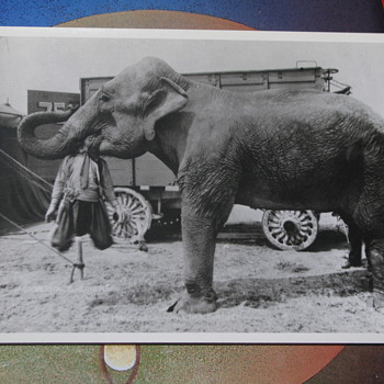 Circus side show postcard - Animals