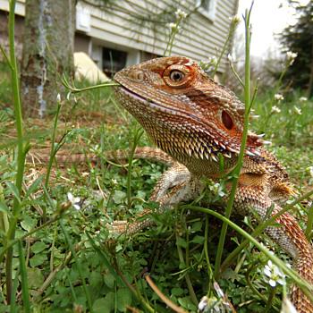 Spring  - Animals