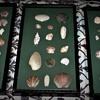 Seashell Collection Wall Hangings Ligonier Beach, Ligonier, PA