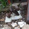old doorknob = new rust garden art?