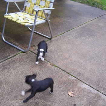 Cleo`s pups last pics. - Animals
