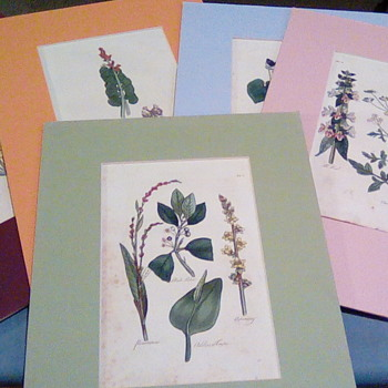 Botanical Herb book hand Colored pages - Fine Art
