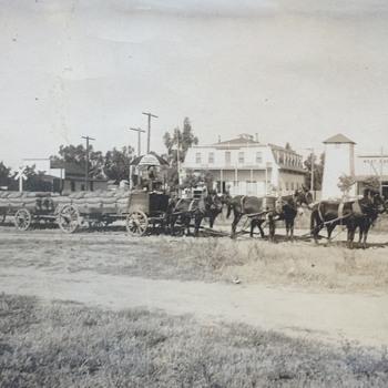 Mule team - Photographs