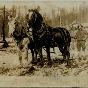 Eastern Washington Logging Scenes..1920s - Photographs