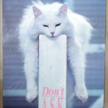 "Cat Poster ""Don't Ask"" - Posters and Prints"