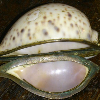 Georgian period cowrie shell snuffbox - Tobacciana