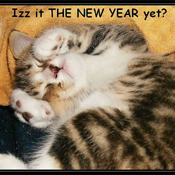 HAPPY NEW YEARS TO ALL......... - Animals