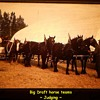 History Captured in Photos..........Small Rural Agricultural Fair ( 1974 ) Post Number # 2