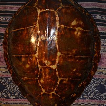 Green Sea Turtle Shell - Animals
