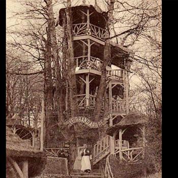 Shake the Tree  - Postcards