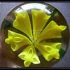 CHINESE - Art Glass Paperweight ( Yellow Flower )