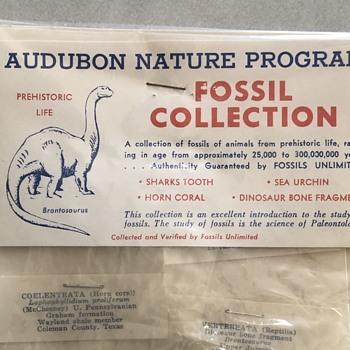 Audubon Nature Program Fossil Collection - Animals
