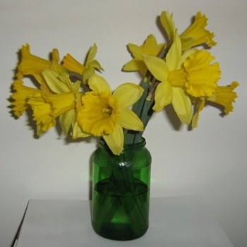 Happy Spring! Daffodils only last 4 days - Glassware