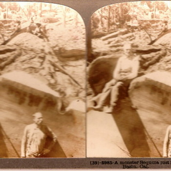 A Monster Sequoia - Photographs