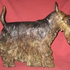Bronze Scottish (Scottie) Terrier