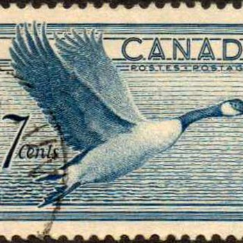 "1952 - Canada ""Canada Goose"" Postage Stamp - Stamps"