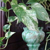 Franz Welz trophy vase