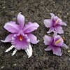 Vintage Celluloid Brooch and Earrings - Orchid