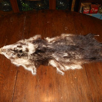 An Opposum Pelt After Battle with a Pet